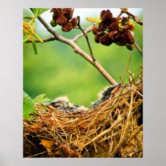巣で眠るミドリツバメのひな鳥 ポスター