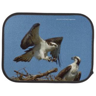 巣のカーマットを飛ばしているミサゴの鳥 カーマット