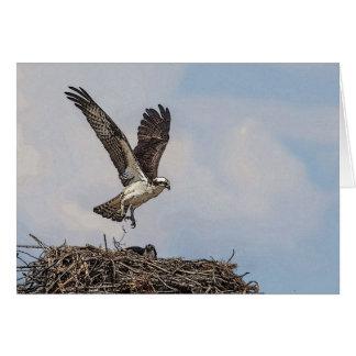 巣のミサゴ グリーティングカード