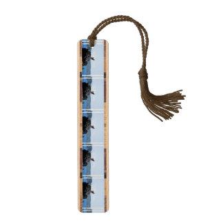 巣のミサゴ ブックマーク