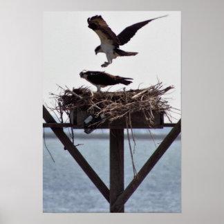 巣のミサゴ ポスター