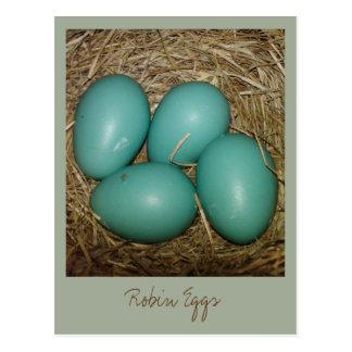 巣のロビンの卵 ポストカード