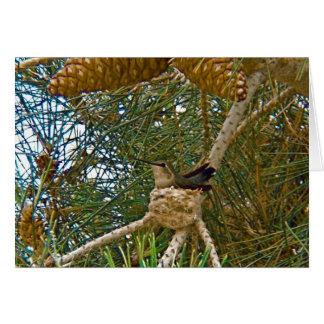 巣の写真のハチドリ カード