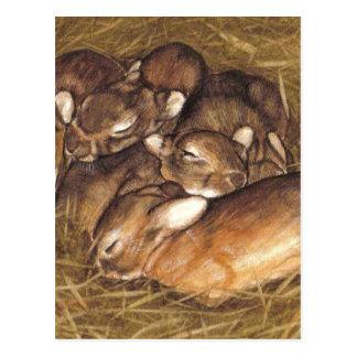巣の芸術のベビーのウサギのキット ポストカード