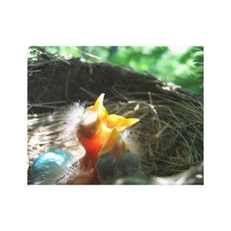 巣の赤ん坊のロビン キャンバスプリント