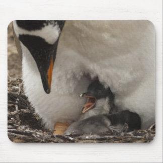 巣のGentooのペンギン(Pygoscelisパプア)との マウスパッド