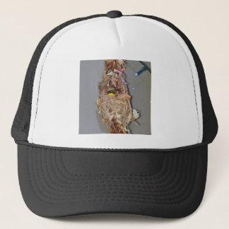 巣オーストラリアのオリーブによって支持されるSUNBIRD キャップ