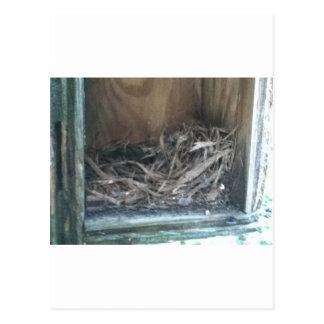 巣箱の巣 ポストカード