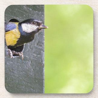巣箱の穴のクロドリ親 コースター