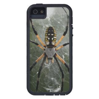 巨大なくも/黄色及び黒のArgiope iPhone 5 カバー