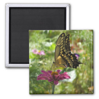 巨大なアゲハチョウの蝶 マグネット