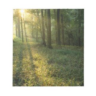 巨大なカシおよびヒッコリーの森林を通した日の出 ノートパッド