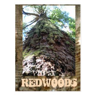 巨大なレッドウッド ポストカード
