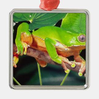 巨大な二色猿Treefrog、Phyllomedusa メタルオーナメント