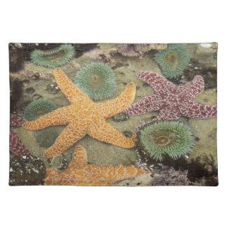 巨大な緑のアネモネおよび黄土色の海星 ランチョンマット