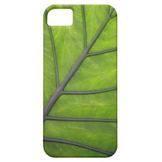 巨大な緑の葉のiPhone 5の場合カバー iPhone SE/5/5s ケース