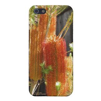 巨大な蝋燭(バンクシア) iPhone SE/5/5sケース