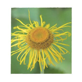 巨大なFleabane (Inula magnifica) ノートパッド