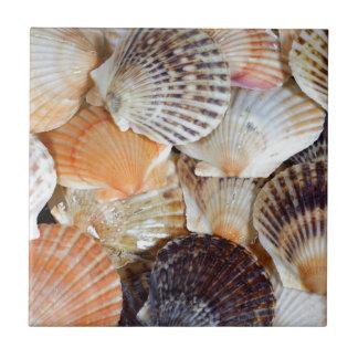帆立貝種のZyclochlamysのpatagの貝 タイル
