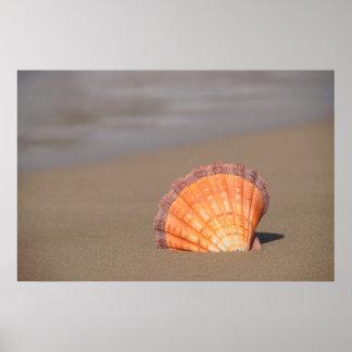 帆立貝Shell|クレタ、ギリシャ ポスター