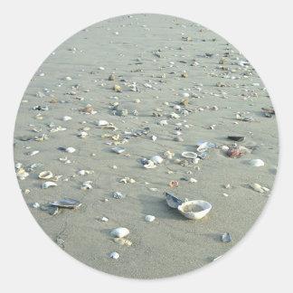 帝国ビーチ、カリフォルニアの海の貝 ラウンドシール