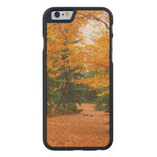 常緑のマツおよび秋の木 ケース