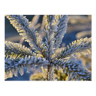 常緑の木のフロスト、ホーマー、アラスカ ポストカード