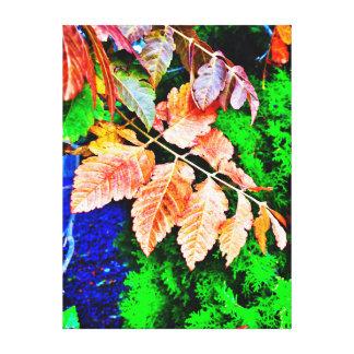 常緑の背景の紅葉 キャンバスプリント