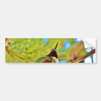 常緑樹のハチドリ バンパーステッカー
