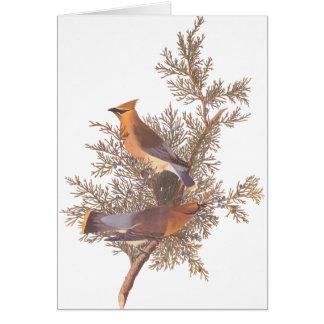常緑樹のAudubonのヒメレンジャクの鳥の組 カード