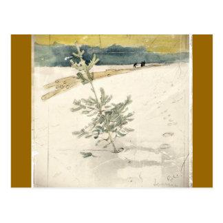 常緑樹 ポストカード