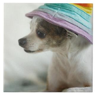 帽子を身に着けているチワワのクローズアップ タイル