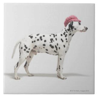 帽子を身に着けている犬 タイル