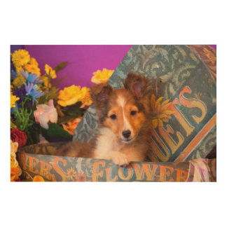 帽子箱のシェットランド・シープドッグの子犬 ウッドウォールアート