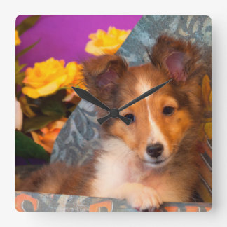 帽子箱のシェットランド・シープドッグの子犬 スクエア壁時計