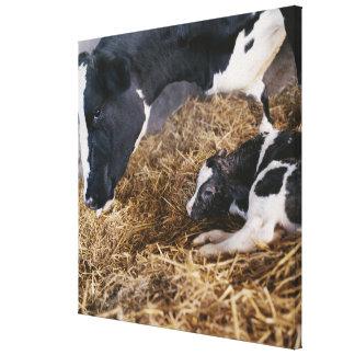 干し草の牛そして子牛 キャンバスプリント