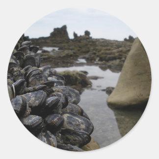 干潮のニューポートビーチ筋肉 ラウンドシール