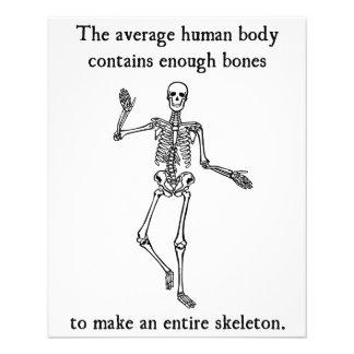 平均人体の骨組骨 チラシ