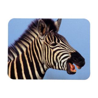 平野のシマウマ(Equusのクアッガ)の呼出し マグネット