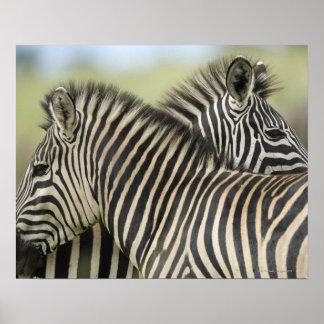 平野のシマウマ(Equusのクアッガ)の組、Hagaのゲーム2 ポスター