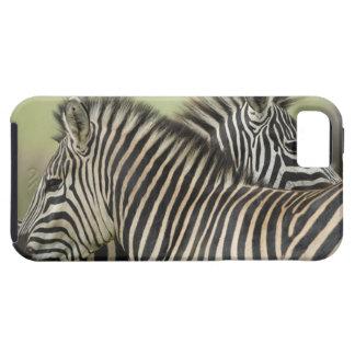 平野のシマウマ(Equusのクアッガ)の組、Hagaのゲーム2 iPhone SE/5/5s ケース