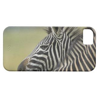 平野のシマウマ(Equusのクアッガ)の組、Hagaのゲーム iPhone SE/5/5s ケース