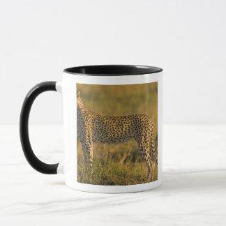 平野、マサイ語のチータのAcinonyxのjubatus) マグカップ