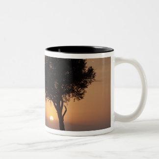 平野、マサイ語マラ2の木のシルエット ツートーンマグカップ