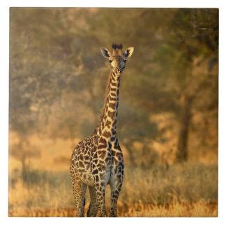 年少のキリン、Giraffaのcamelopardalis タイル