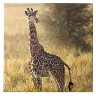 年少のキリン、Giraffaのcamelopardalis 2 タイル