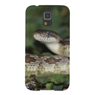 年少のクマネズミヘビ GALAXY S5 ケース