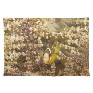 年少のクラークのAnemonefish (Amphiprion) ランチョンマット