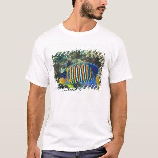 年少の豪奢なAngelfish Pygoplites Tシャツ