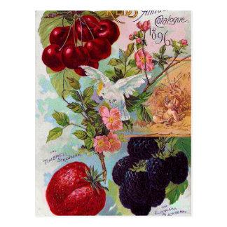 年次フルーツカタログ1896年 ポストカード
